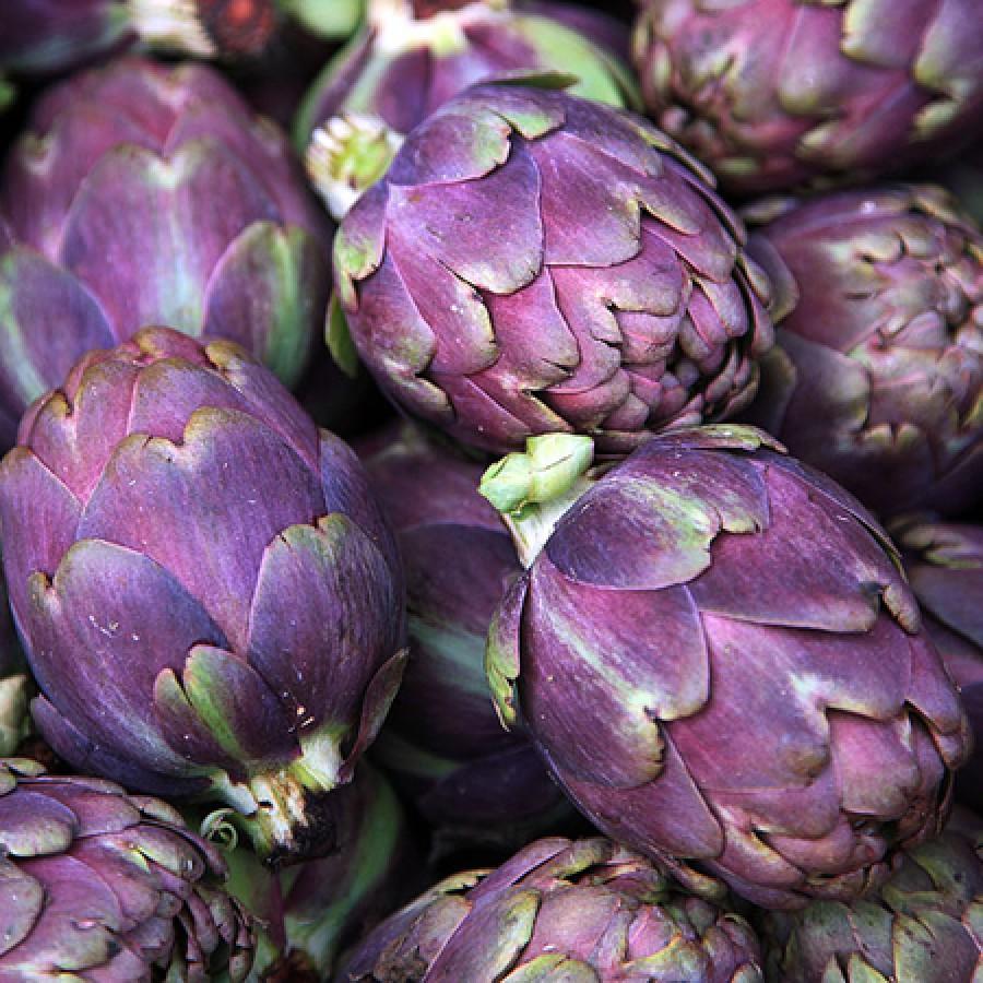 Artichoke Seeds - Purple Italian Globe
