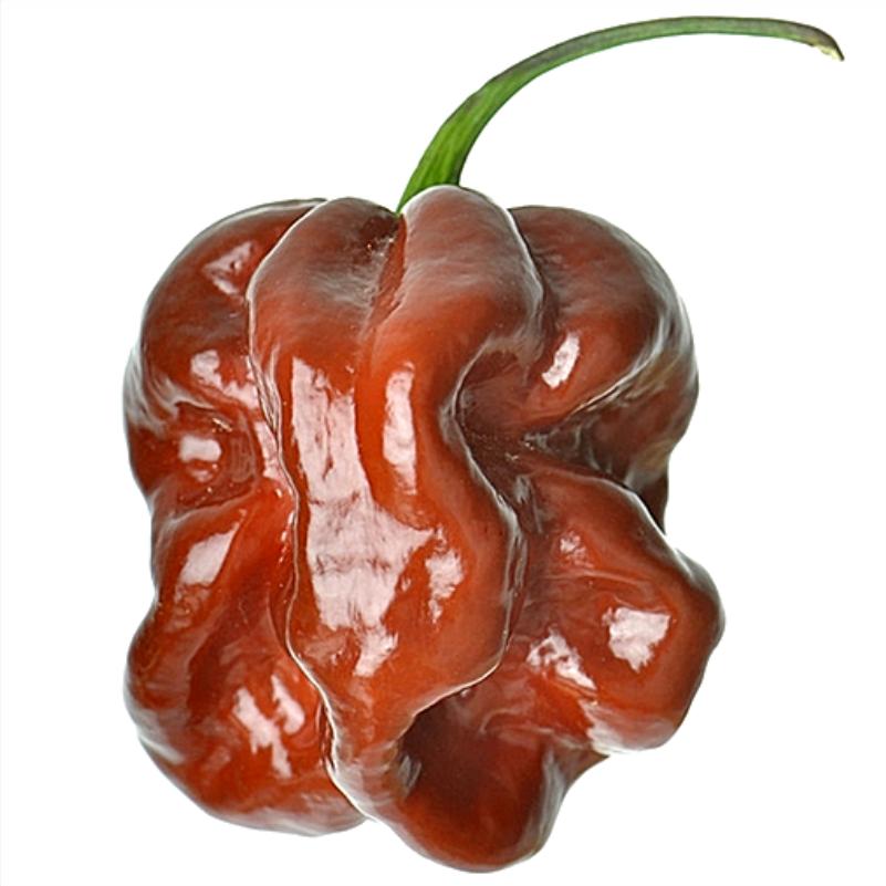 brown habanero pepper