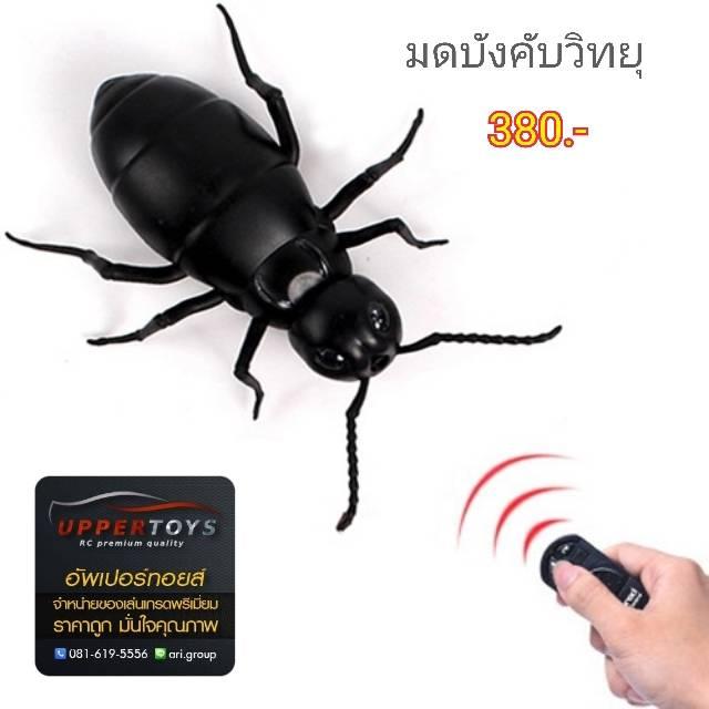มดบังคับ Giant ant