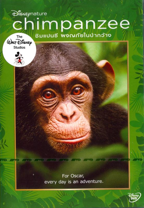 Disneynature: Chimpanzee - ชิมแปนซี ผจญภัยในป่ากว้าง