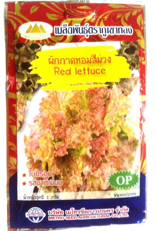 กาดหอมสีม่วง Red lettuce ภูเขาทอง